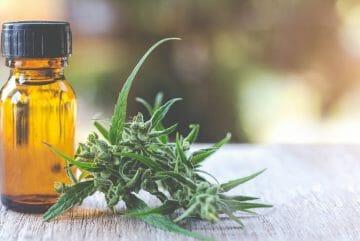Olejek CBD – Kompendium. Olej konopny czyli z marihuany ? Czy produkty z konopii indyjskich są lecznicze? Jakie ma zastosowanie, jakie ma opinie i jaka jest średnia cena!